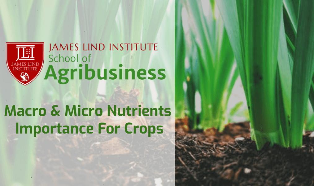 Macro & Micro Nutrients