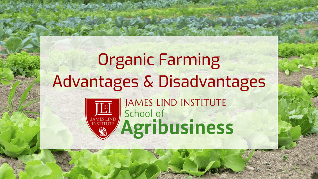 Organic Farming Advantages & Disadvantages