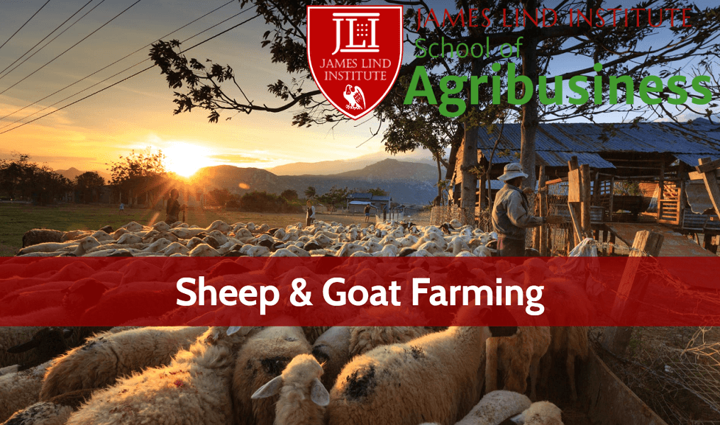 Sheep Goat Farming