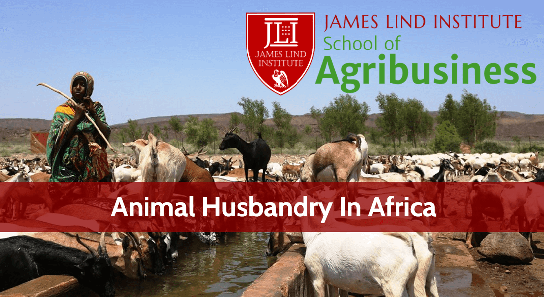 Animal Husbandry In Africa